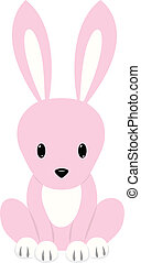 Baby rabbit seated