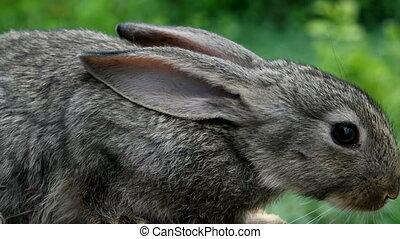 Rabbit. Beautiful animal of wild nature - Portrait of...