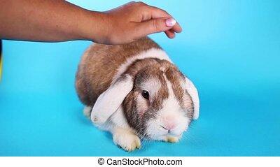Rabbit Caressing. Bunny pet caress bunny love loving lop. -...