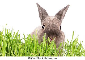 rabbit., engraçado, pequeno, páscoa, experiência.
