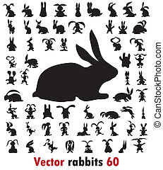rabbit - 60 different rabbits on the white background