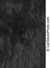 Rabbit fur | Texture - Black rabbit fur texture. Part of the...
