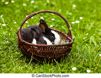 rabbit in a basket on a green grass background