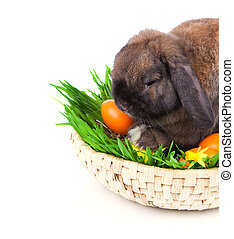 rabbit in a basket with Easter eggs, on a white background