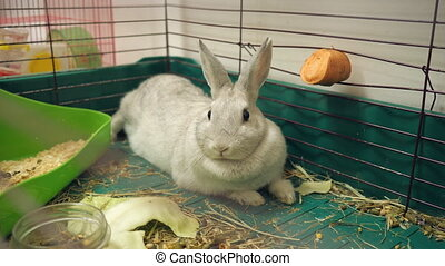 Rabbit in a cage - Close-up of domestic rabbits in cage at...
