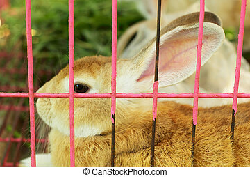 Rabbit in a cage.