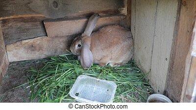 rabbit in a wooden box video 4k