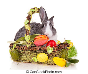 Rabbit in basket on white background