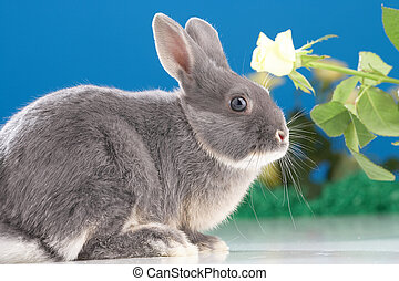 Rabbit in front of yellow flowers