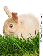 Rabbit in grass