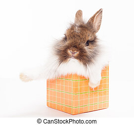 rabbit in red giftbox
