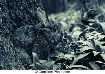 rabbit in spring forest