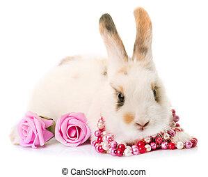 rabbit in studio