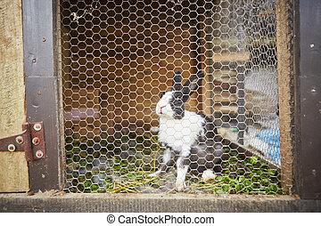 Rabbit in the rabbit hutch - selective focus