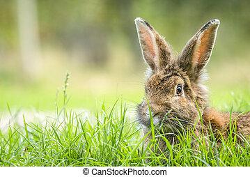 Rabbit in the spring hiding