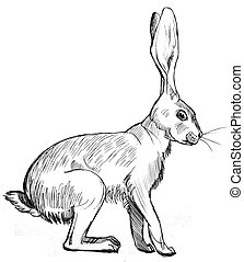 Rabbit - ink drawing of a seated rabbit