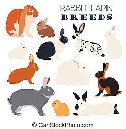 Rabbit, lapin breed icon set. Flat design. Vector...