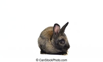 rabbit moves on a white screen (three months old) - rabbit...