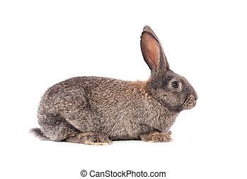 Rabbit on a white background.