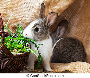 rabbit on a wooden background
