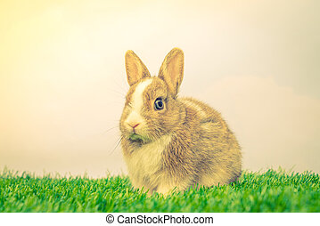 Rabbit on green grass for easter holiday ( Filtered image processed vintage effect. )