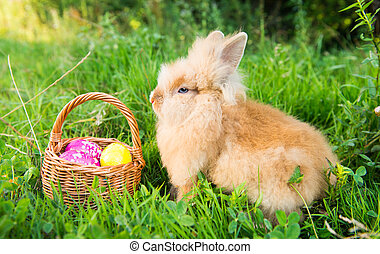 rabbit on green grass in spring