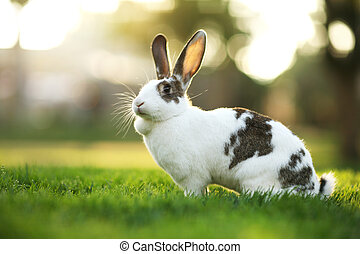 Rabbit on green grass. Shallow DOF.