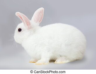 rabbit on grey - Little white rabbit sits on grey background