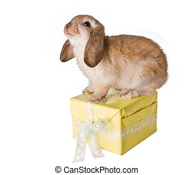 Rabbit on present - Little brown easter bunny sitting on a...