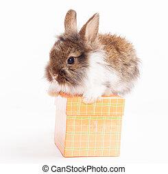 rabbit on red giftbox
