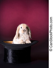 Rabbit on stage - Adorable easter rabbit in a magician's hat