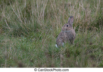 Rabbit on the lookout
