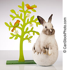 Rabbit on white and egg
