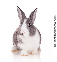 Rabbit on white background - Studio shot of domestic rabbit...