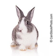 Studio shot of domestic rabbit on white background