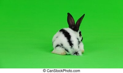 rabbit on white screen