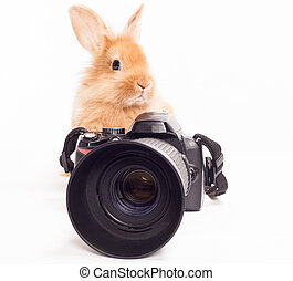 Rabbit photographer.