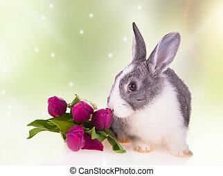 rabbit - Easter baby rabbit with green grass, eggs and...