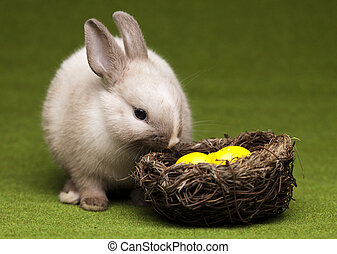 Rabbit - Cute baby bunny