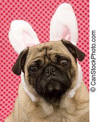 Rabbit Pug