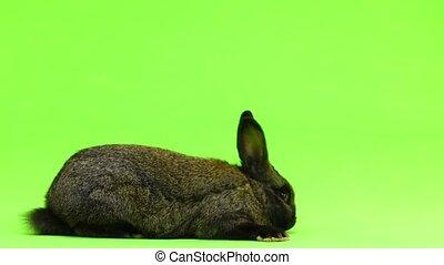 rabbit runs away from green screen frame