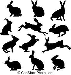 Rabbit Set