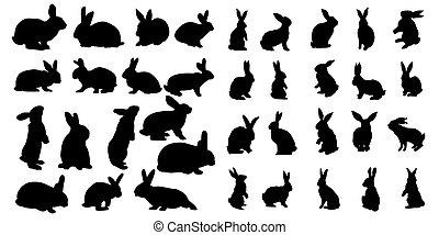 Rabbit Set Isolated On White Background