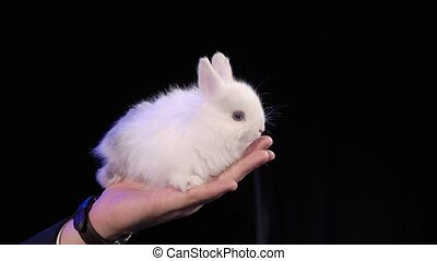 Rabbit sits on the magician's arm on the dark stage
