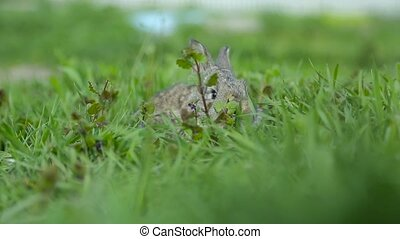 Rabbit sitting in green grass