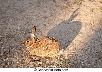 rabbit sitting in the sun