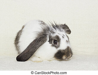 rabbit sitting on a blanket
