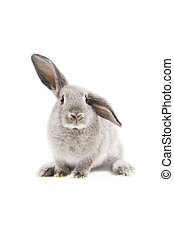 Rabbit - Adorable rabbit isolated on a white background