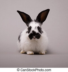 Rabbit - Adorable bunny on a grey background