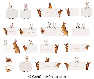 Rabbit -  rabbit  with a white background for text drawing